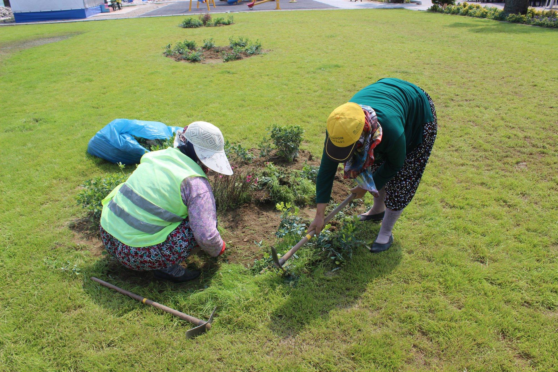 Burhaniye'de Çevre Temizliği Ve Ot Biçme Çalışmaları Devam Ediyor