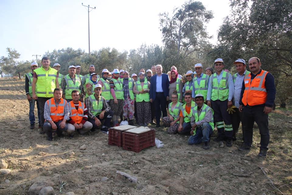 Burhaniye Belediyesi Zeytin Hasadıyla Zeytinyağı Üretimine Başladı